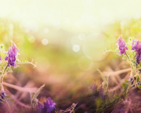herbst Lavendel